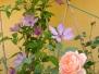 Klimplanten foto's van onze klanten